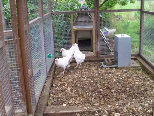 Garden Hens 005a