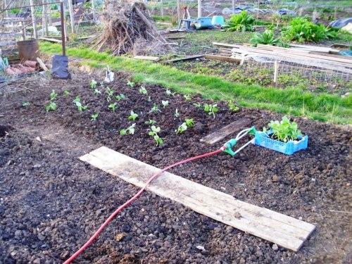Planting 001a