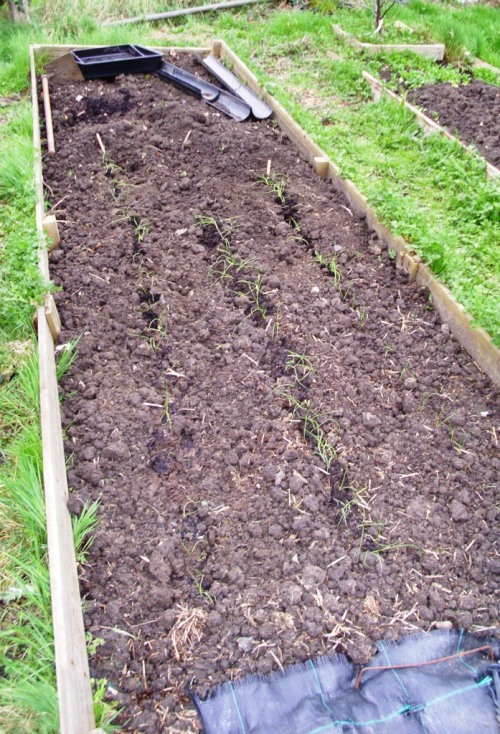 Allotment 003a
