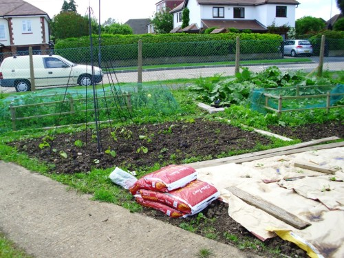 Peas are under the net near the fence, rhubarb to the right, and climbing and dwarf beans on the newly planted bed