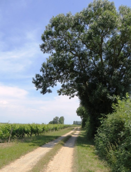This tour ended with a bumpy ride along the farm tracks through the Cravant vineyards.