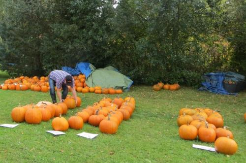 With Halloween coming up, there were some beautiful pumpkins for sale ...
