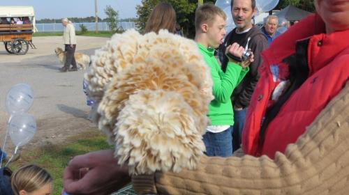 And there were real birds including this gorgeous Poland from Hollywater Hens.
