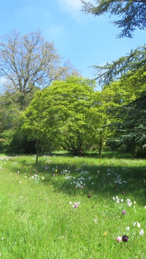 The wildflower and tulip gardens were still beautiful ...
